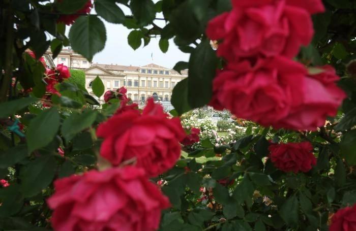 Rose del Parco Reale di Monza