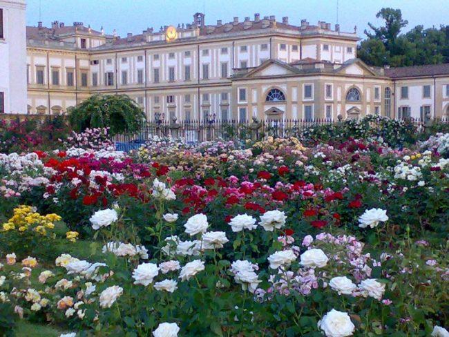 Roseto Fumagalli Nisi della Villa Reale
