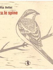 Marco Bellini <em>Tra le spine</em>, Il ragazzo innocuo, 2018
